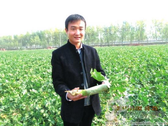 记者 王秀波 通讯员 杨怀霞 摄影报道 2011年冬天的脚步近了,徐成的35亩萝卜喜获丰收。一斤萝卜一块二,一亩地产萝卜上万斤,35亩地收入30多万元。徐成掰着手指给记者细算他的萝卜账。 今年春天,在德城区打拼足足6个年头的徐成,把目光投向了农村。 谁也没想到,6年前还东拼西凑借钱开店的徐成,这次回老家开上了宝马车,出手也非常阔绰。他一口气包下了平原王杲铺乡70亩耕地,截至目前,投资超过百万。   菜价低迷,他却种出贵族萝卜 11月12日下午,徐成带记者来到了他位于王杲